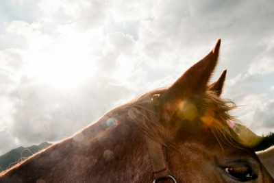 Horse abstract photo